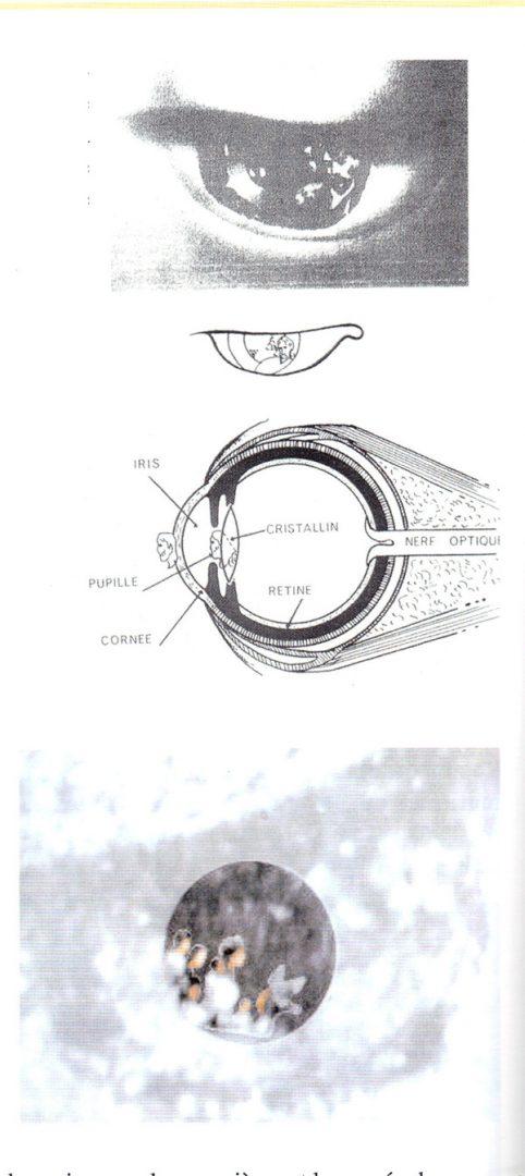 Les-yeux-de-ND-Guadalupe