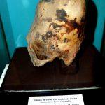 Crâne-allongé-musée-de-LIMA
