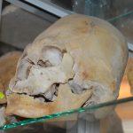 Crâne-allongé-musée-de-Para