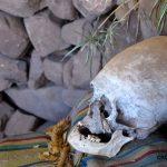 crâne-allongé-vue-de-profil