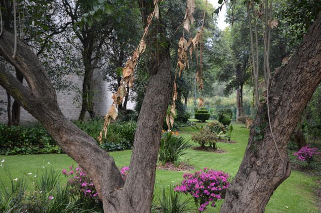Jardin-du-musée-de-Mexico