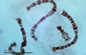 Les chromosomes : Sont-ils le chainon manquant de la mémoire cosmique ?