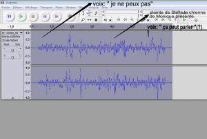 Enregistrement de voix d'entités