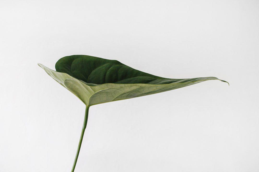 Les plantes sonores – Les plantes communiqueraient par des clics sonores